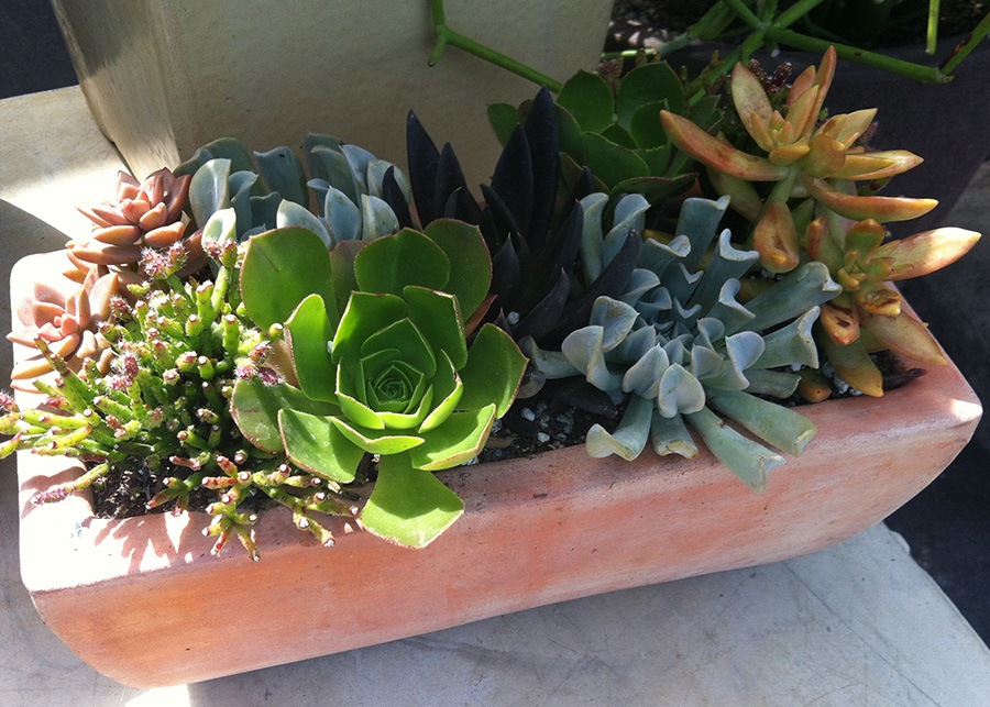 succulents-planter_9