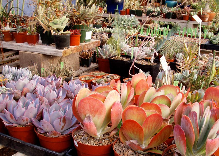 succulents2_9